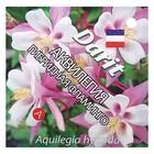 """Семена цветов Аквилегия гибридная """"Фламинго"""", Мн, 0,1 г"""