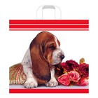 """Пакет """"Бассет в подарок"""", полиэтиленовый с петлевой ручкой, 40х36 см, 70 мкм - фото 151645904"""