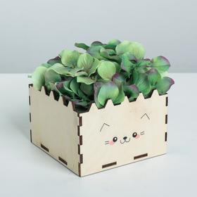 Кашпо флористическое «Котя», натуральный, 12 × 12 × 8.4 см