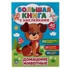 Большая книга с наклейками «Домашние животные», 240 х 330 мм