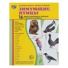 """Набор демонстрационных плакатов """"Зимующие птицы"""" 173х220 мм"""