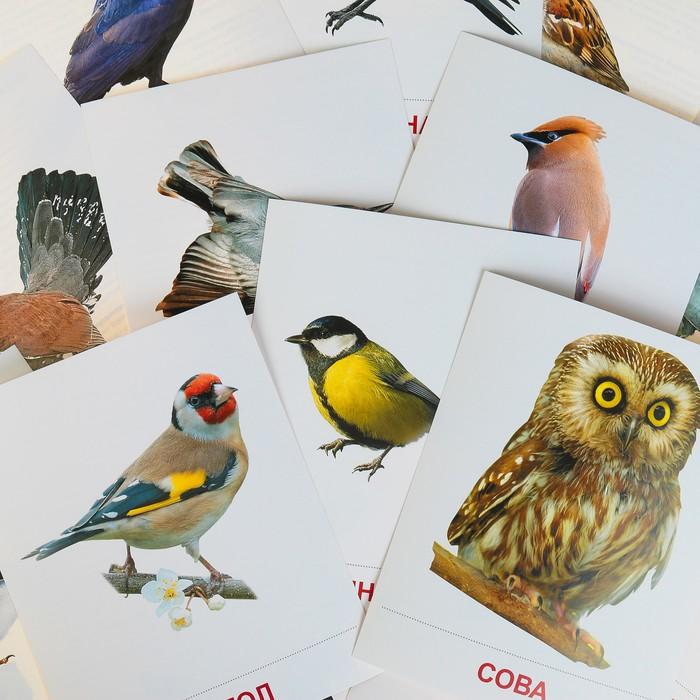 демонстрационный материал птицы зимующие картинки
