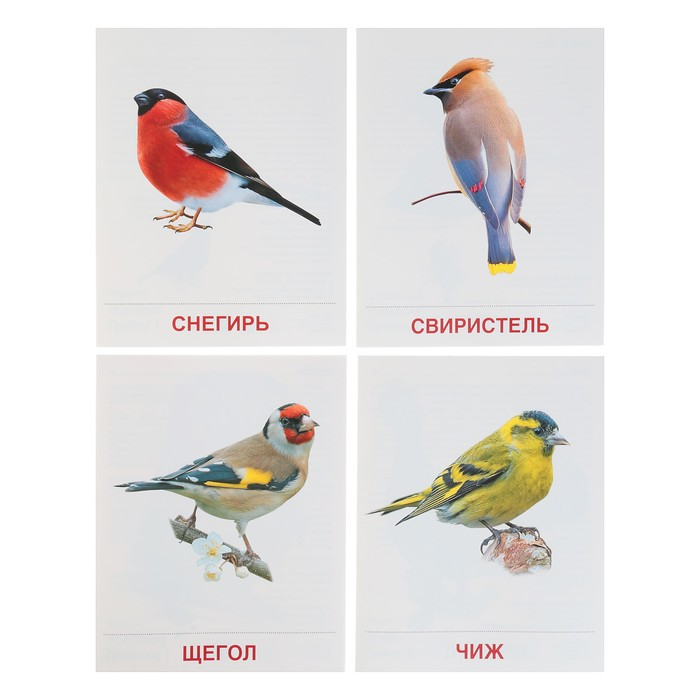 текстура крема птицы демонстрационный материал находится стадии длительной