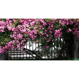 Photo banner, 300 × 160 cm, with photo printing,