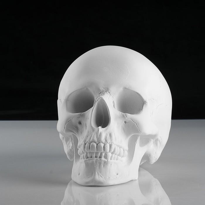 Гипсовая фигура. Череп анатомический, 14.5 х 22 х 16,5 см