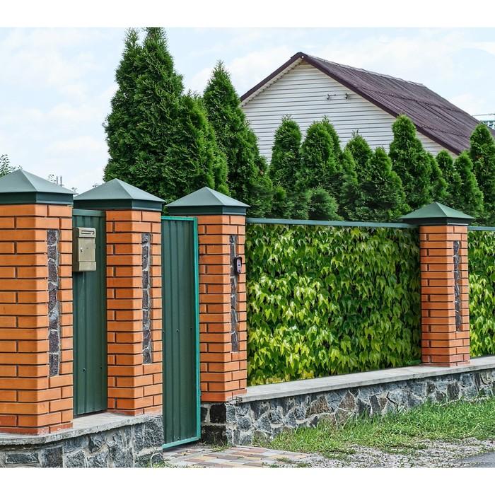 Фотобаннер, 250 × 150 см, с фотопечатью, «Виноградная стена»