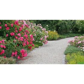 Фотобаннер, 250 × 150 см, с фотопечатью, люверсы шаг 1 м, «Сад»