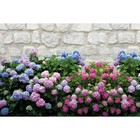 Фотобаннер, 250 × 150 см, с фотопечатью, «Цветы»