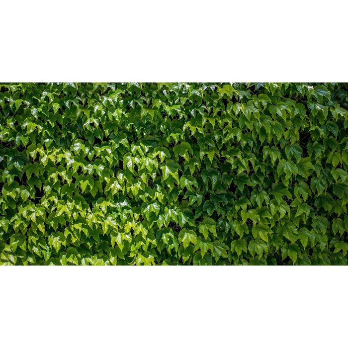 Фотобаннер, 300 × 200 см, с фотопечатью, «Виноградная стена»