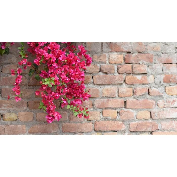 Фотобаннер, 300 × 200 см, с фотопечатью, «Красные цветы»