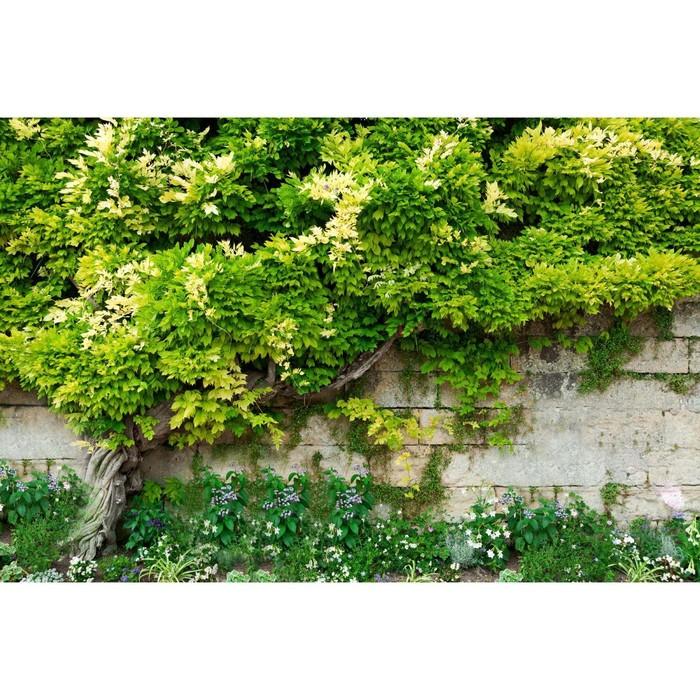 Фотобаннер, 250 × 150 см, с фотопечатью, с люверсами, «Лиана»