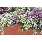 Фотобаннер, 250 × 200 см, с фотопечатью, «Весенние цветы»