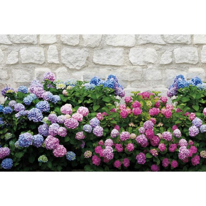 Фотобаннер, 300 × 160 см, с фотопечатью, «Цветы»