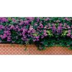 Фотобаннер, 250 × 200 см, с фотопечатью, «Фиолетовые цветы»