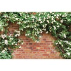 Фотобаннер, 300 × 160 см, с фотопечатью, «Белые цветы»