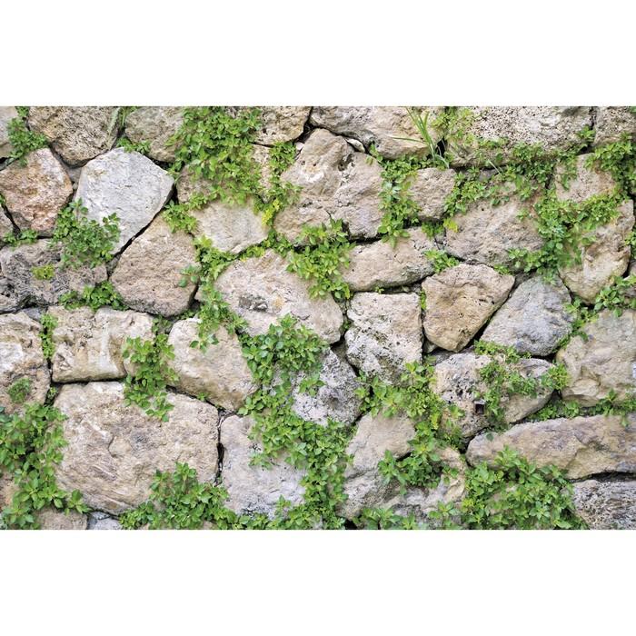 Фотобаннер, 300 × 160 см, с фотопечатью, «Каменная стена»