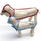 Дождевик с капюшоном для собак OSSO, р. 70 (ДС 70 см), прозрачный, окантовка микс цветов