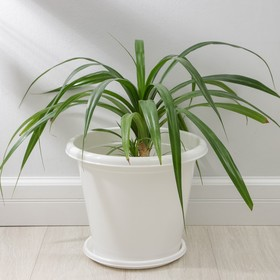 Горшок с поддоном «Эконом», 10 л, цвет белый