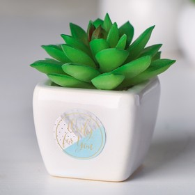 Succulent in a ceramic pot Only for You, 7.5 × 5.5 × 6 cm