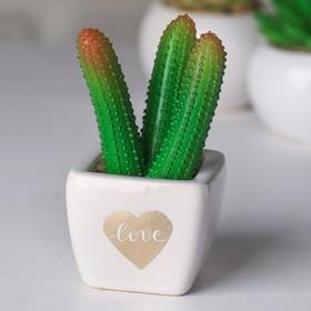 Суккулент в керамическом горшочке Love, 10.5 × 5.5 × 6 см