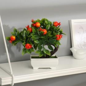 """Bonsai Tree pomegranate"" 10x18 cm"