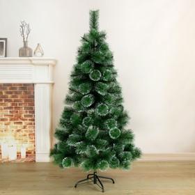 Cedar overflow 150 cm, d of bottom tier 90 cm, d of the needles 10 cm, 152 branches