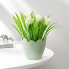 "Pots 8x6,5 cm ""Shell"", white"