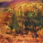 """Постельное бельё """"Этель"""" 1.5 сп Осенний лес 143х215см, 160х240 см, 50х70 см - 2 шт, мако-сатин - фото 626714"""