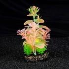 Островок аквариумных растений, светящихся в темноте, 20 х 8 х 19 см