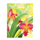 """Пакет """"Яркие цветы"""", полиэтиленовый с вырубной ручкой, 31х40 см, 60 мкм - фото 152584688"""