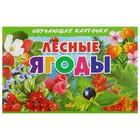 Обучающие карточки «Лесные ягоды» (европодвес)