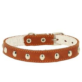Ошейник кожаный украшенный, на синтепоне, ОШ 21-27 х 1,5 см, микс