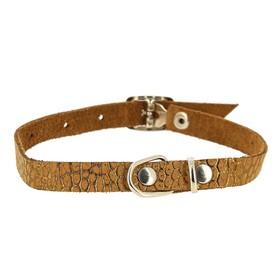 Ошейник кожаный для собак и кошек, без бубенчика, мягкий, ОШ 20-25 х 1 см, микс цветов Ош