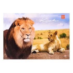 Альбом для рисования А4, 40 листов на клею «Лев и львица», обложка мелованный картон, блок 160 г/м²