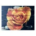 """Картина для бани, тематика цветы """"Оранжевая роза"""""""