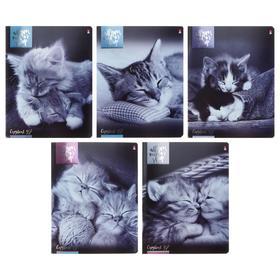 Тетрадь 48 листов в клетку «Котята мур-мур», обложка мелованный картон, гибридный лак, металлизация, МИКС
