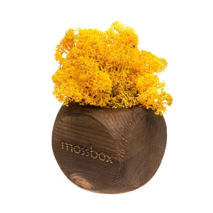 """ЭкоКуб  """"MossBox"""" Fire Yellow Dice мох стабилизированный"""