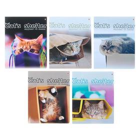 Тетрадь 48 листов в клетку «Кошкин дом», обложка мелованный картон, УФ-лак, МИКС
