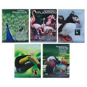 Тетрадь 48 листов в клетку «Райские птицы», обложка мелованный картон, металлизация, конгрев, МИКС