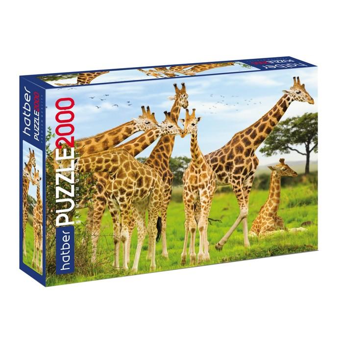 Пазл 2000 элементов «Жирафы»