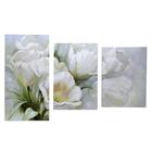 """Картина модульная на подрамнике """"Белые тюльпаны"""" 99x65 см. (33х45, 33х50, 33х65)"""