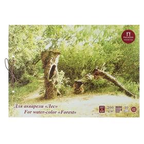 Альбом для акварели А3, 10 листов на завязках «Лес», блок 200 г/м²