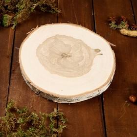 Спил берёзы, шлифованный с одной стороны, диаметр 23 см