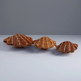 "Set of boxes ""Shells"", 3 piece, clear 49×26×6, 45×24×5, 42×21×4 cm, rattan"