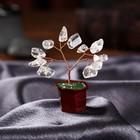 "Souvenir ""bonsai Money tree, rock crystal"" 12 PCs 8х3х3,2 cm"