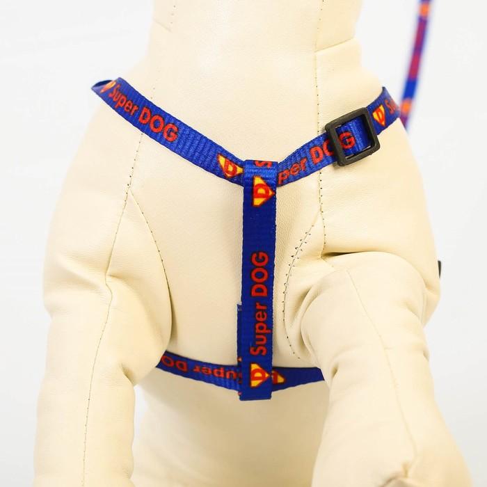 Комплект Super DOG: шлейка 28-47 см, поводок 120 см, адресник, макс вес 10 кг