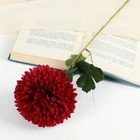 """Цветы искусственные """"Хризантема"""" 9*48 см, бордовый"""
