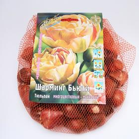 "Тюльпан ""Шарминг Бьюти"" 45см, р/р 11/12, сетка 50 шт"