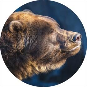 Чехол запасного колеса Медведь R16, 17 диаметр 77см Skyway экокожа Ош