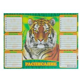 Расписание 'Дикие животные' тигр, А4 Ош